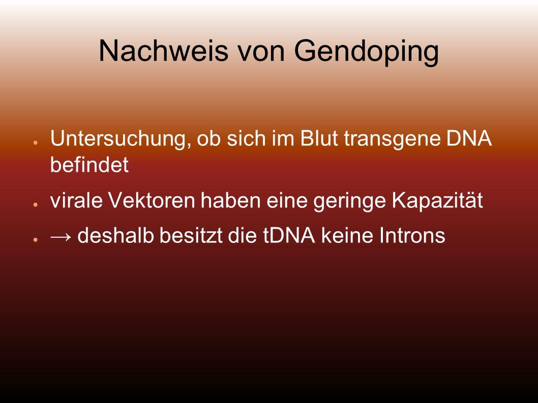 Nachweis von Gendoping Untersuchung, ob sich im Blut transgene DNA befindet virale Vektoren haben eine geringe Kapazität deshalb besitzt die tDNA keine Introns