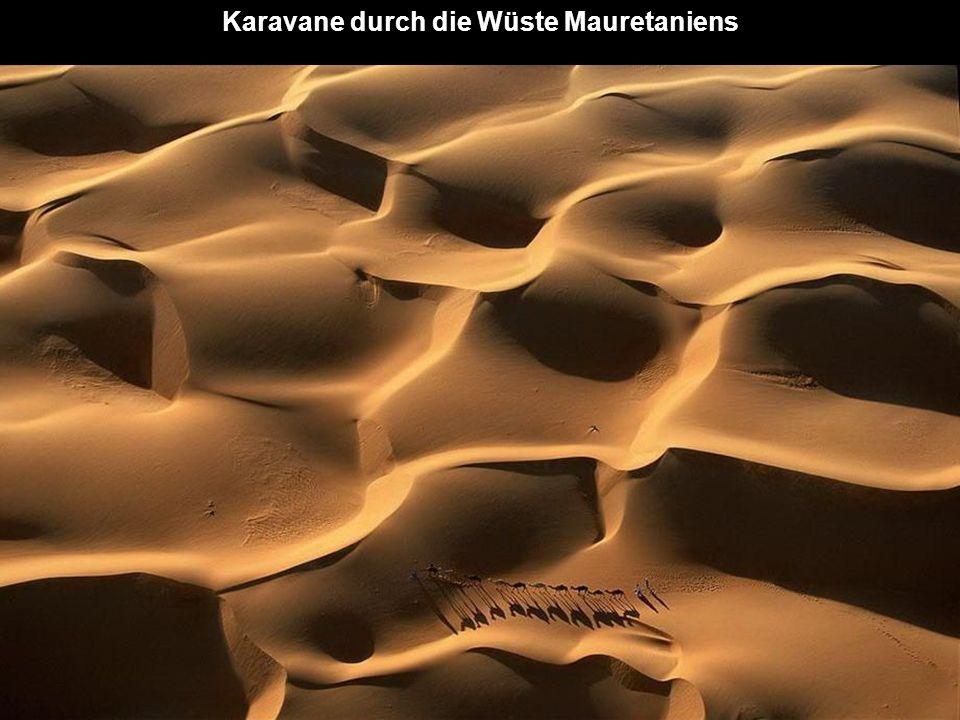 Karavane durch die Wüste Mauretaniens