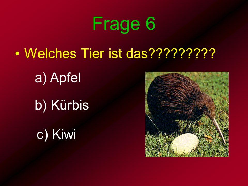 Frage 6 Welches Tier ist das????????? a) Apfel b) Kürbis c) Kiwi