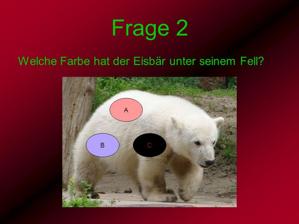 Frage 2 Welche Farbe hat der Eisbär unter seinem Fell? BC A