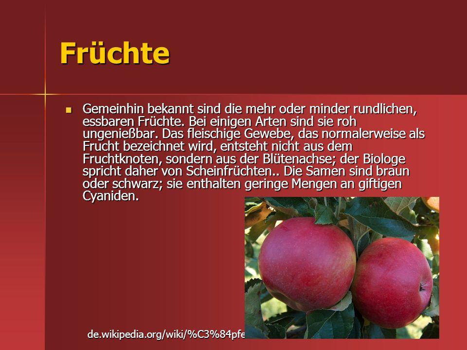 Früchte Gemeinhin bekannt sind die mehr oder minder rundlichen, essbaren Früchte. Bei einigen Arten sind sie roh ungenießbar. Das fleischige Gewebe, d
