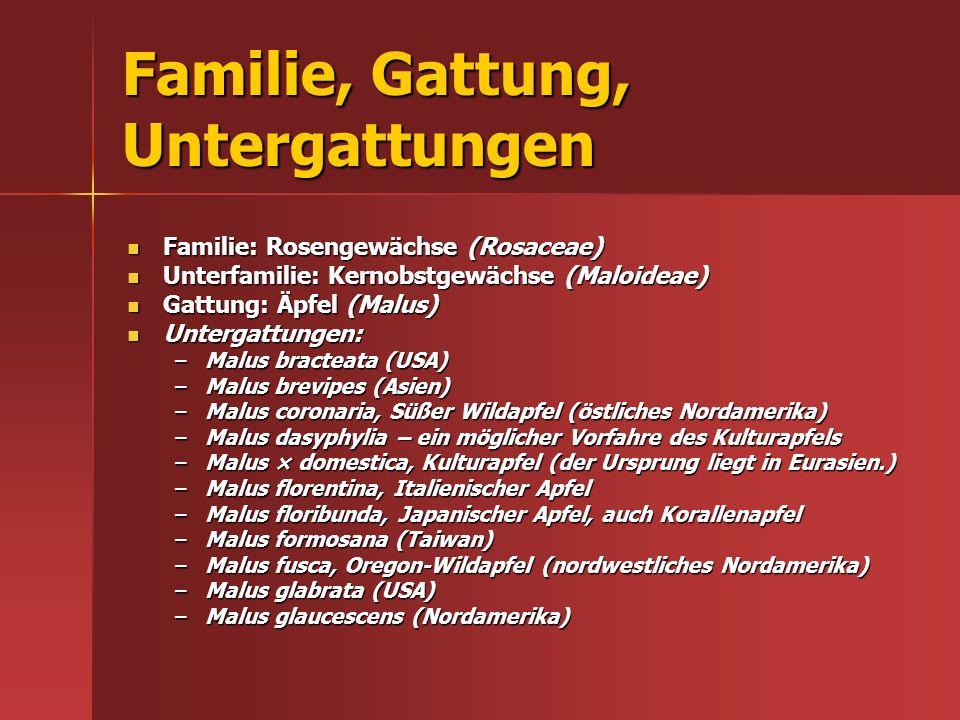 Familie, Gattung, Untergattungen Familie: Rosengewächse (Rosaceae) Familie: Rosengewächse (Rosaceae) Unterfamilie: Kernobstgewächse (Maloideae) Unterf