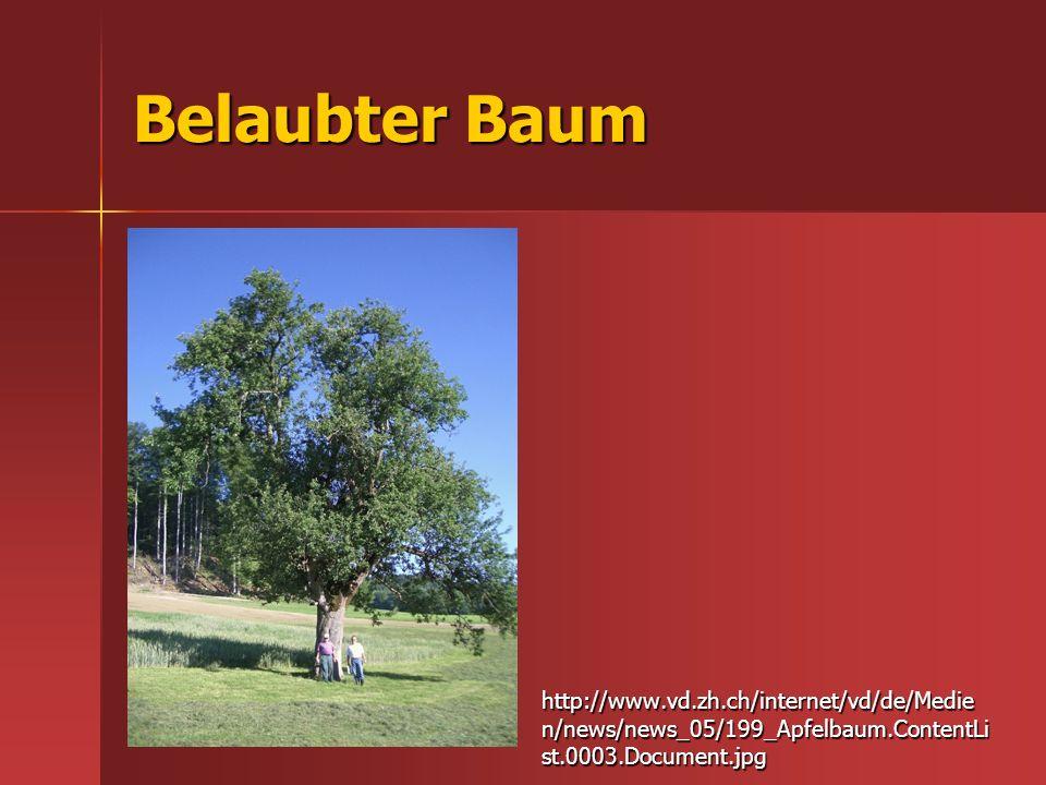 Belaubter Baum http://www.vd.zh.ch/internet/vd/de/Medie n/news/news_05/199_Apfelbaum.ContentLi st.0003.Document.jpg