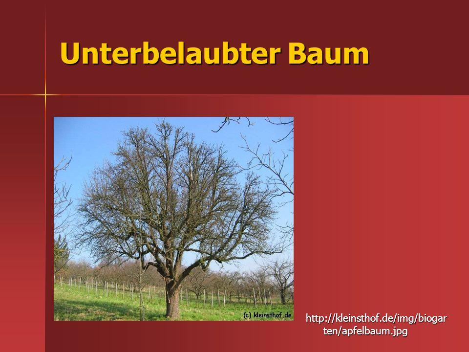 Unterbelaubter Baum http://kleinsthof.de/img/biogar ten/apfelbaum.jpg
