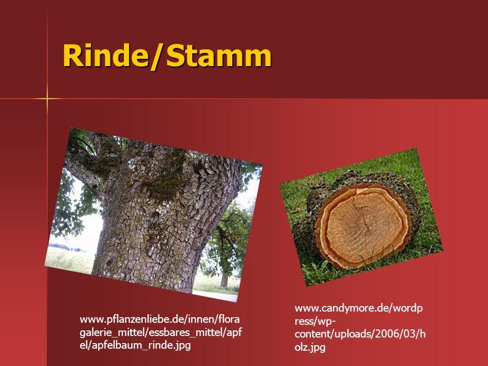 Rinde/Stamm www.pflanzenliebe.de/innen/flora galerie_mittel/essbares_mittel/apf el/apfelbaum_rinde.jpg www.candymore.de/wordp ress/wp- content/uploads