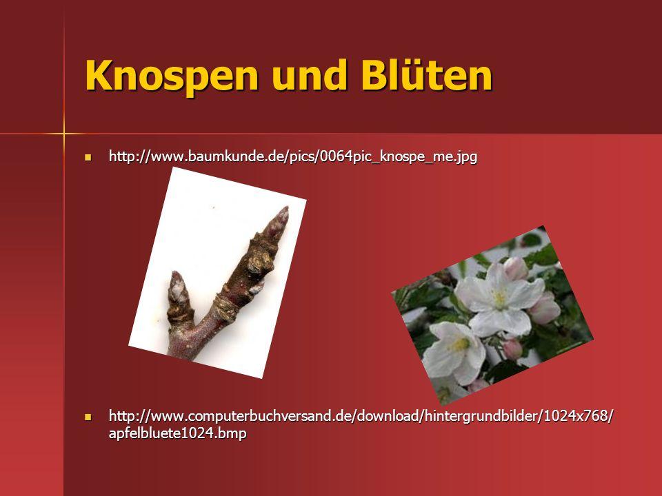 Knospen und Blüten http://www.baumkunde.de/pics/0064pic_knospe_me.jpg http://www.baumkunde.de/pics/0064pic_knospe_me.jpg http://www.computerbuchversan