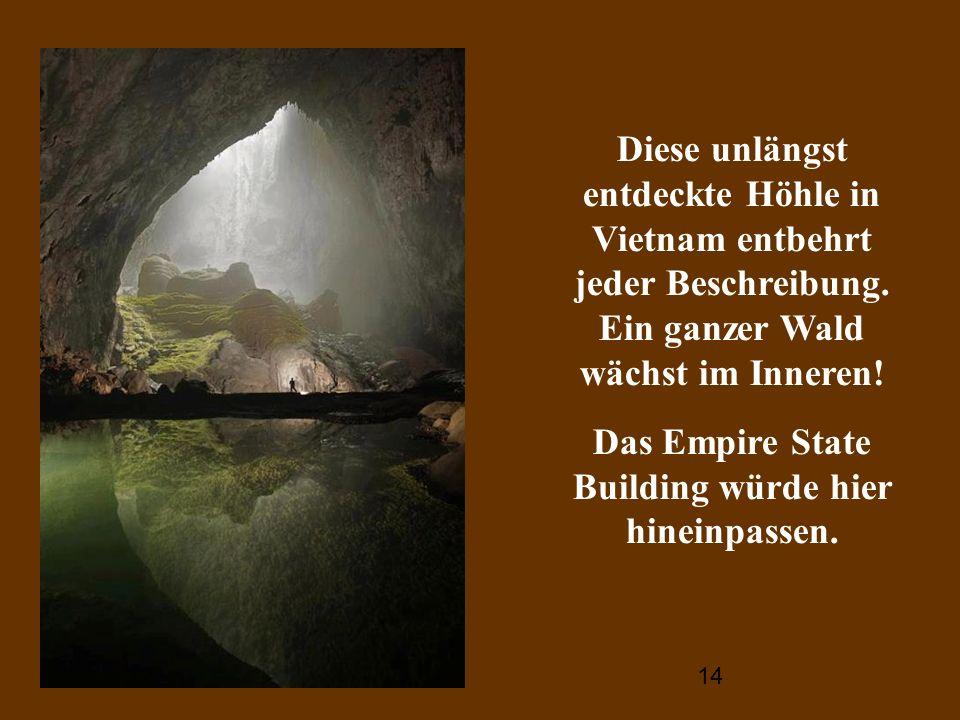 14 Diese unlängst entdeckte Höhle in Vietnam entbehrt jeder Beschreibung. Ein ganzer Wald wächst im Inneren! Das Empire State Building würde hier hine