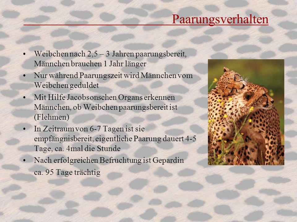 Paarungsverhalten Weibchen nach 2,5 – 3 Jahren paarungsbereit, Männchen brauchen 1 Jahr länger Nur während Paarungszeit wird Männchen vom Weibchen ged