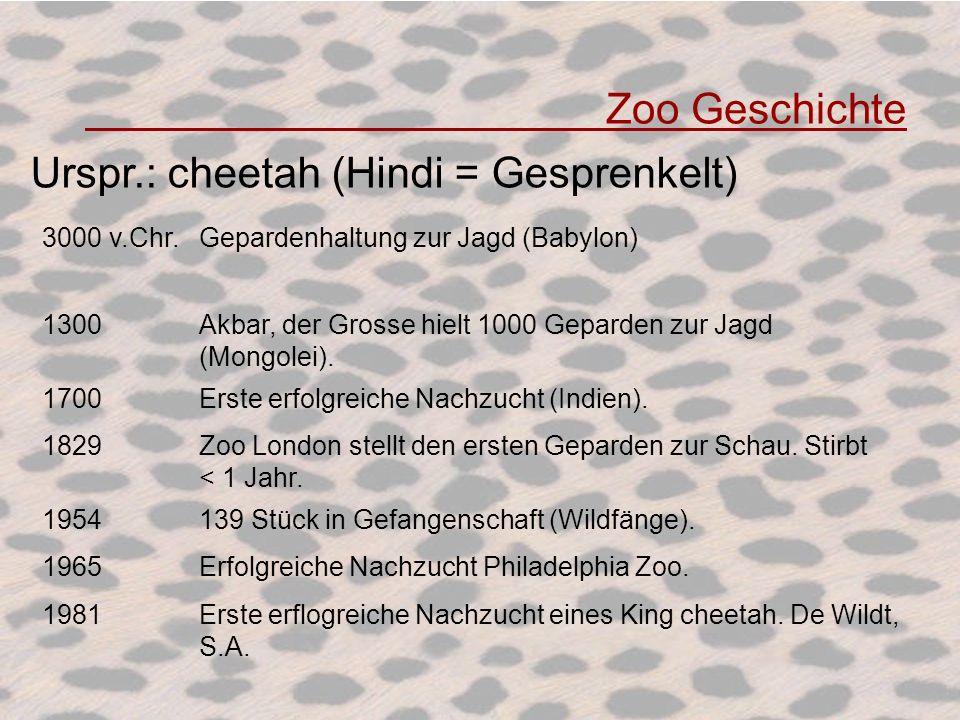 Zoo Geschichte 3000 v.Chr.Gepardenhaltung zur Jagd (Babylon) 1300Akbar, der Grosse hielt 1000 Geparden zur Jagd (Mongolei). 1700Erste erfolgreiche Nac