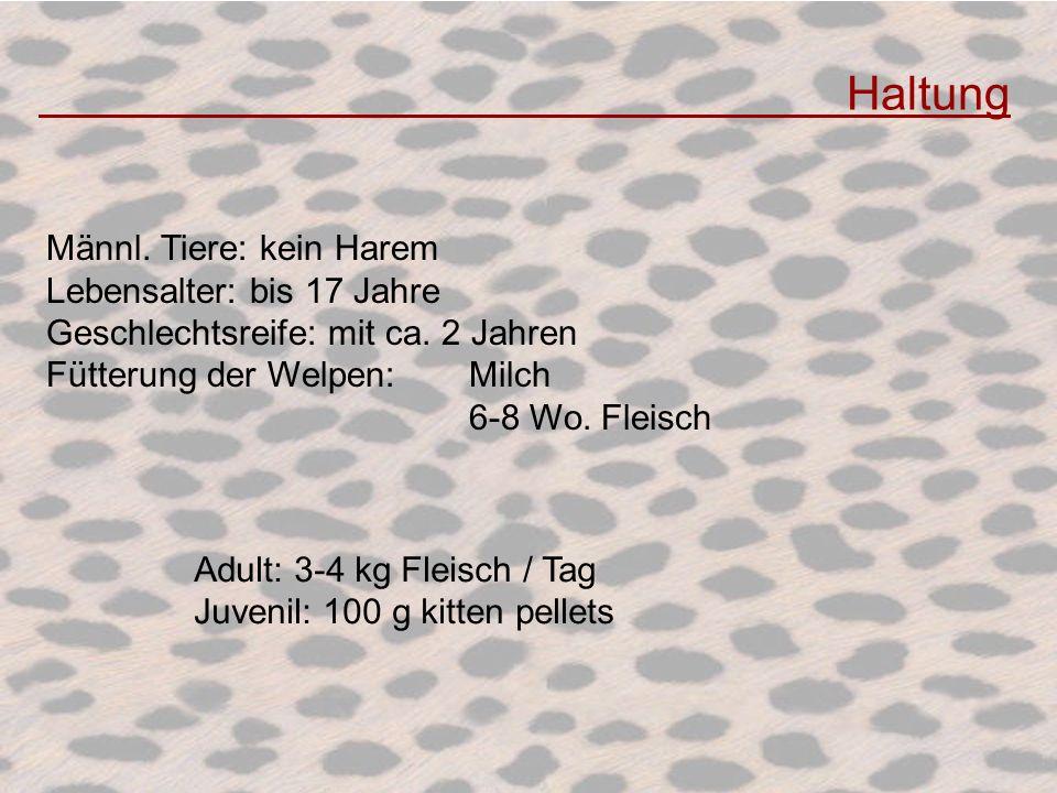 Haltung Männl. Tiere: kein Harem Lebensalter: bis 17 Jahre Geschlechtsreife: mit ca. 2 Jahren Fütterung der Welpen: Milch 6-8 Wo. Fleisch Adult: 3-4 k