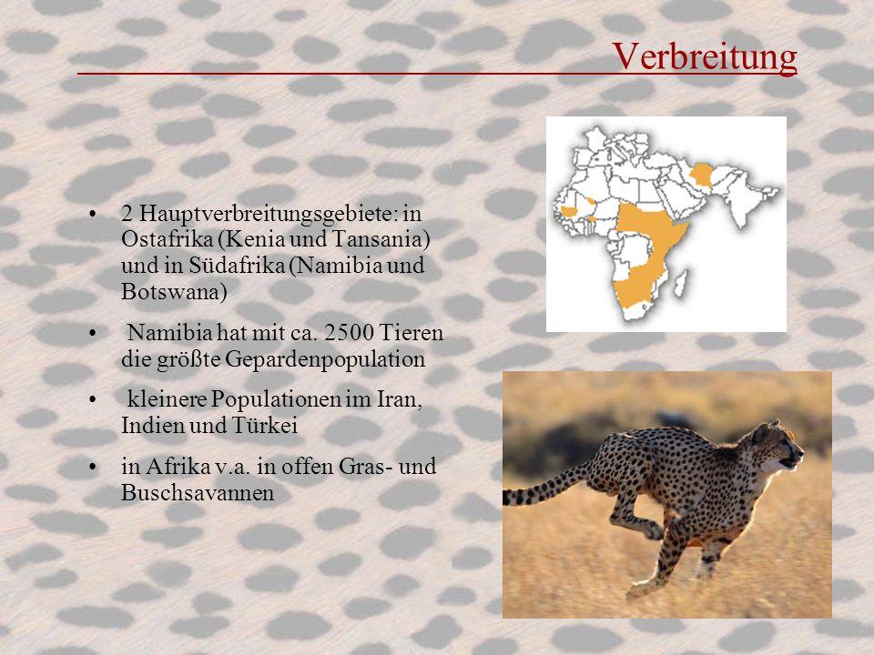 Verbreitung 2 Hauptverbreitungsgebiete: in Ostafrika (Kenia und Tansania) und in Südafrika (Namibia und Botswana) Namibia hat mit ca. 2500 Tieren die