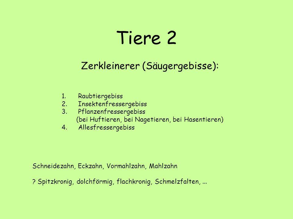 Tiere 2 Zerkleinerer (Säugergebisse): 1.Raubtiergebiss 2.