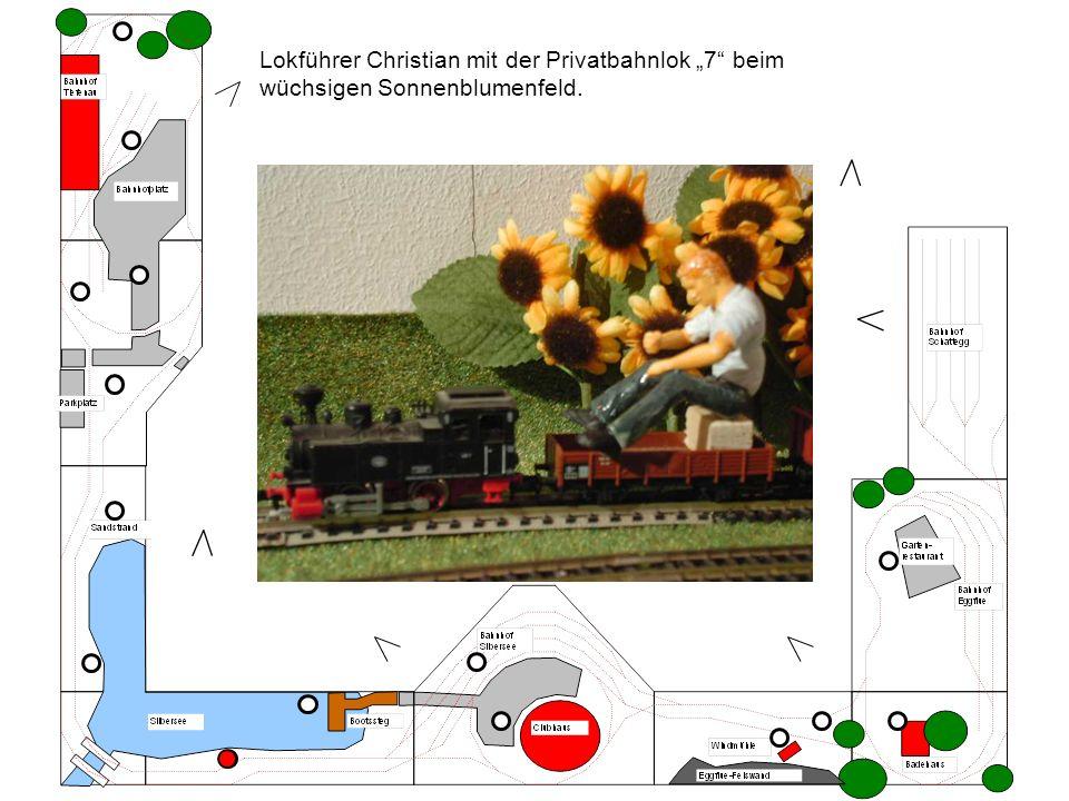 Lokführer Christian mit der Privatbahnlok 7 beim wüchsigen Sonnenblumenfeld.