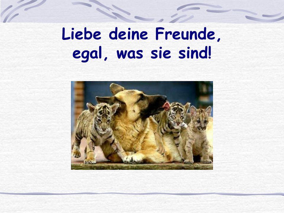 Liebe deine Freunde, egal, was sie sind!