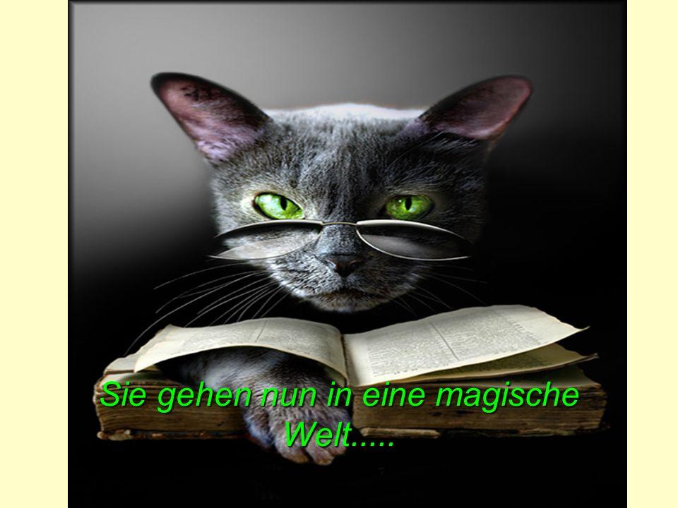 Sie gehen nun in eine magische Welt.....