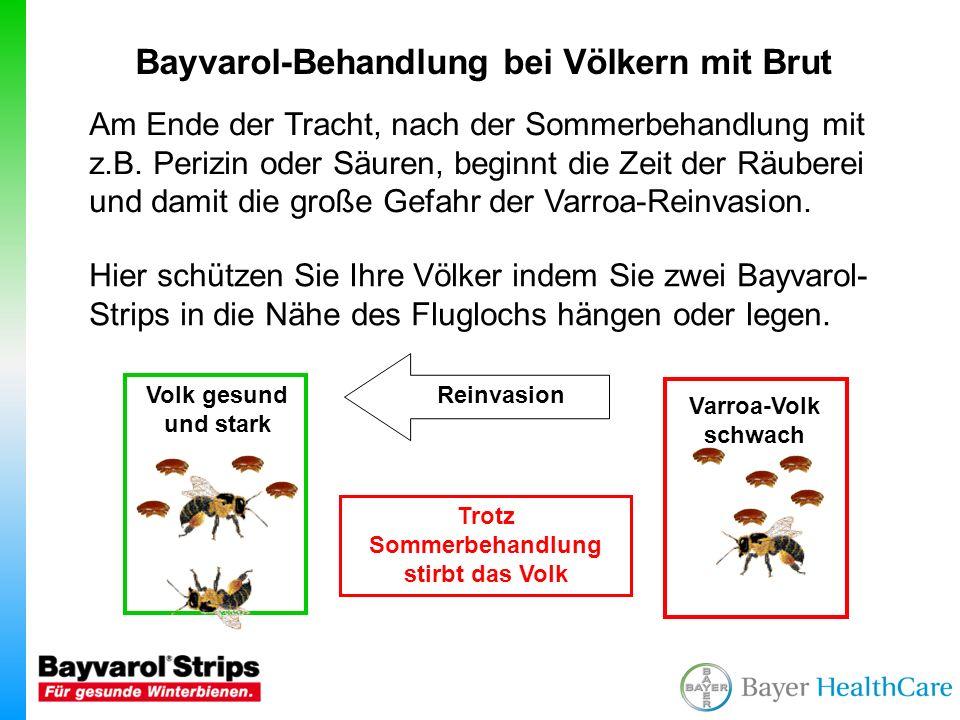 Bayvarol-Behandlung bei Völkern mit Brut Bayvarol-Strips müssen immer nach 6 Wochen aus den Bienenvölkern entfernt werden.