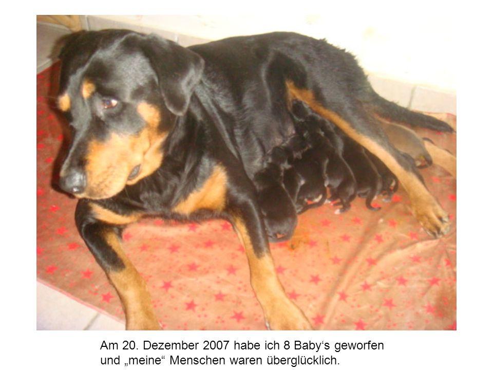 Am 20. Dezember 2007 habe ich 8 Babys geworfen und meine Menschen waren überglücklich.