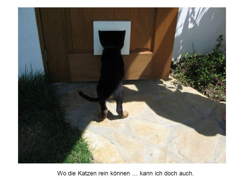 Wo die Katzen rein können … kann ich doch auch.