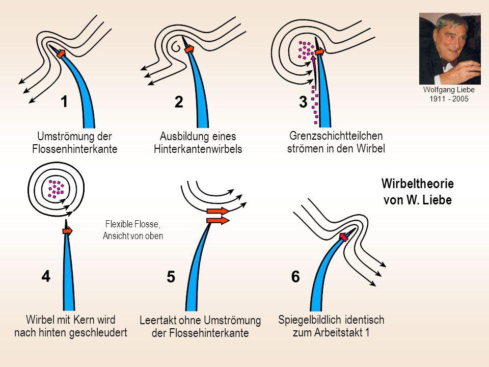 Wirbeltheorie von W. Liebe Umströmung der Flossenhinterkante 1 Ausbildung eines Hinterkantenwirbels 2 Grenzschichtteilchen strömen in den Wirbel 3 Wir