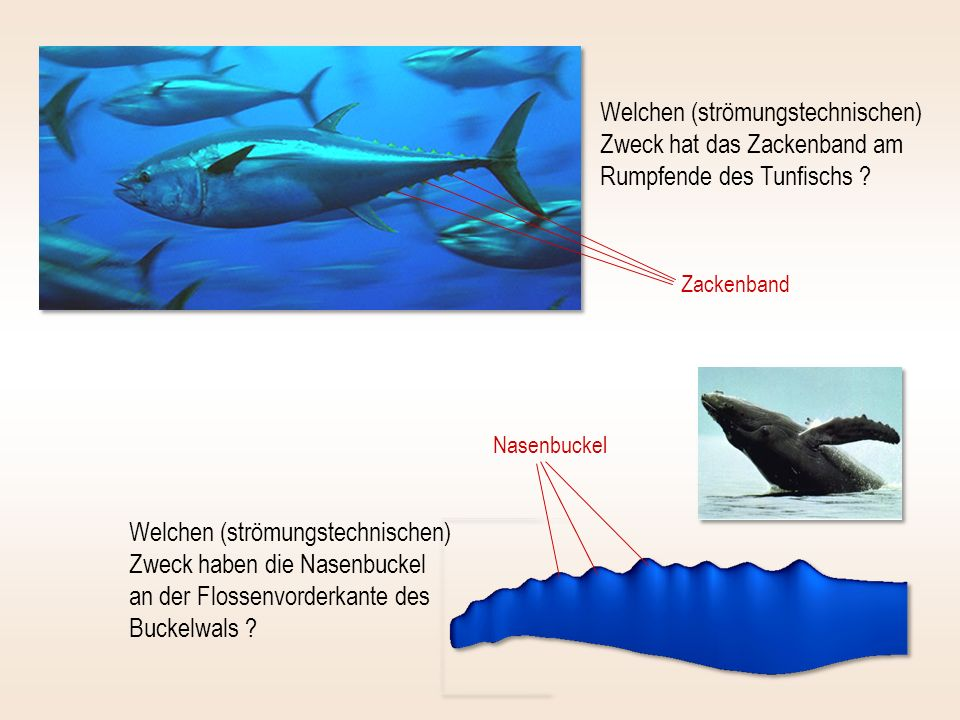Welchen (strömungstechnischen) Zweck hat das Zackenband am Rumpfende des Tunfischs ? Welchen (strömungstechnischen) Zweck haben die Nasenbuckel an der
