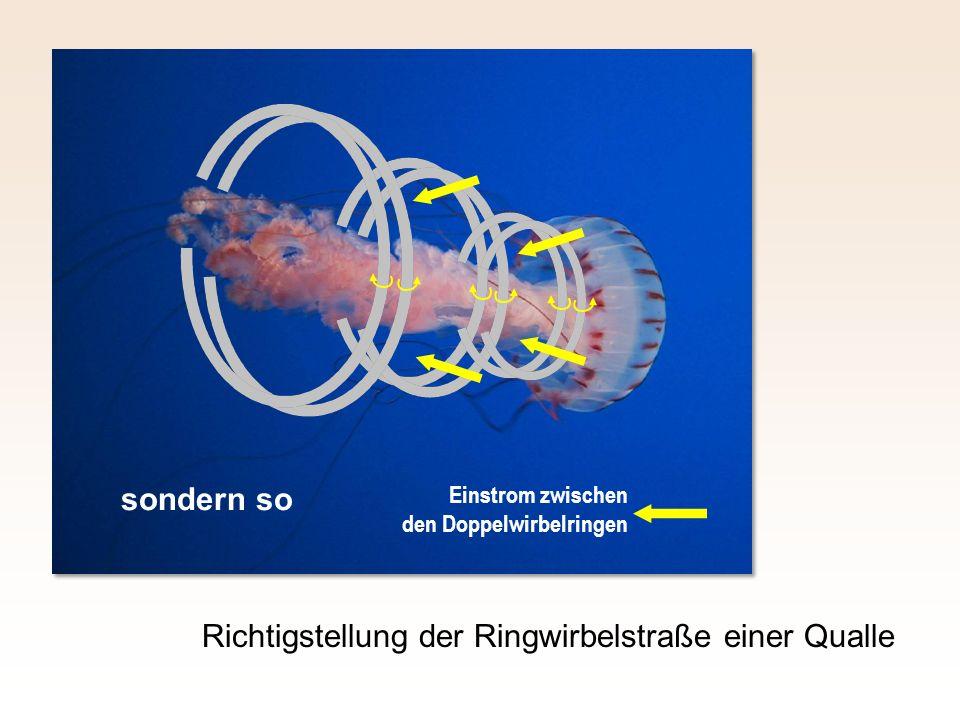 Richtigstellung der Ringwirbelstraße einer Qualle Einstrom zwischen den Doppelwirbelringen sondern so