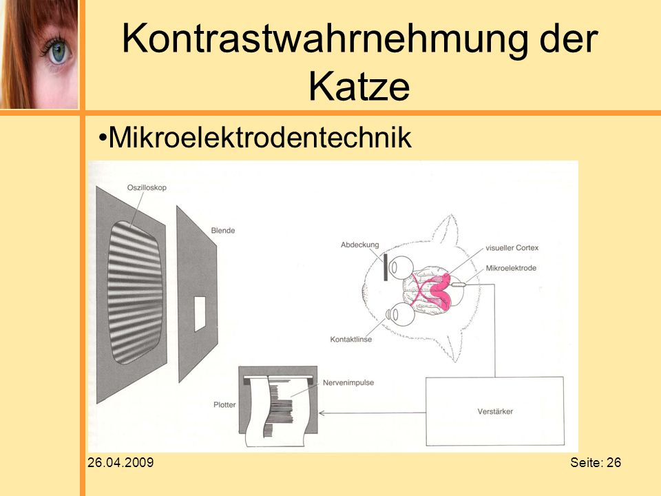 26.04.2009 Seite: 26 Kontrastwahrnehmung der Katze Mikroelektrodentechnik