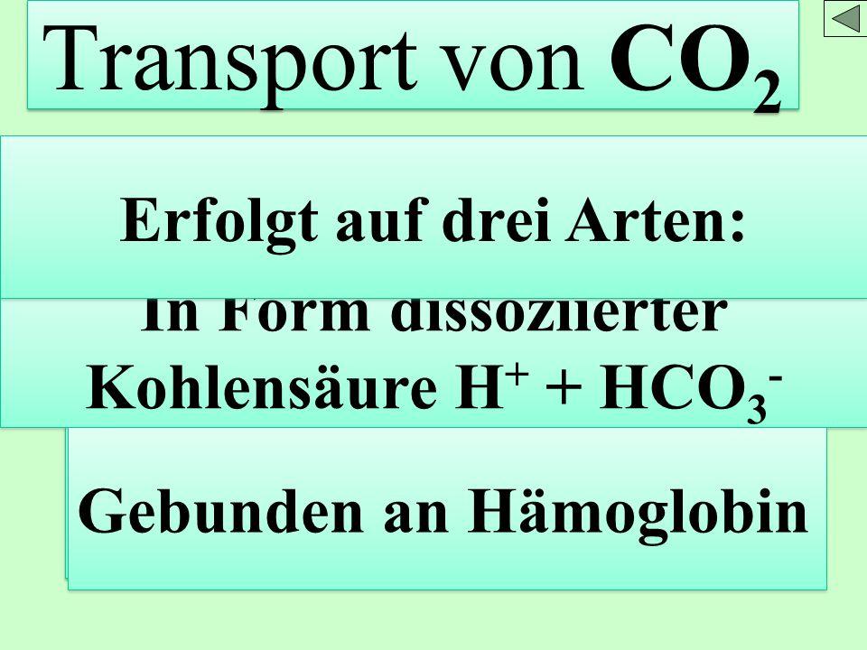 Transport von CO 2 Gelöst im Blutplasma In Form dissoziierter Kohlensäure H + + HCO 3 - Gebunden an Hämoglobin Erfolgt auf drei Arten:
