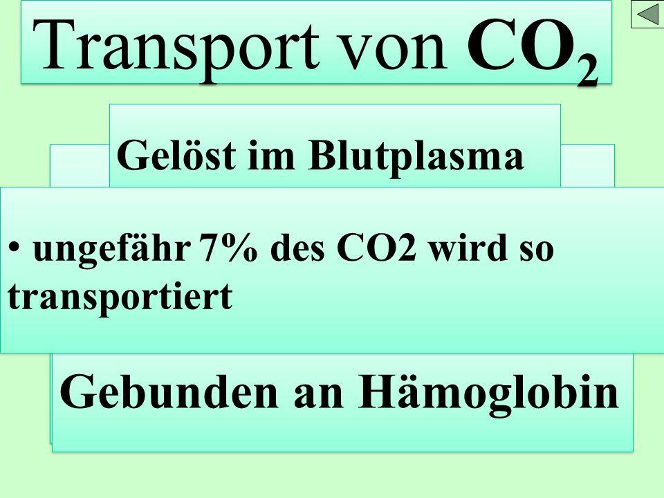 Transport von CO 2 Gelöst im Blutplasma In Form dissoziierter Kohlensäure H + + HCO 3 - Gebunden an Hämoglobin ungefähr 7% des CO2 wird so transportie
