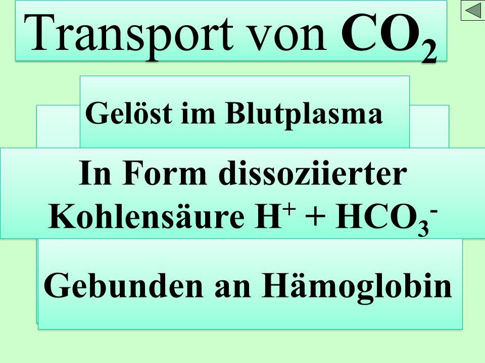 Transport von CO 2 Gelöst im Blutplasma In Form dissoziierter Kohlensäure H + + HCO 3 - Gebunden an Hämoglobin