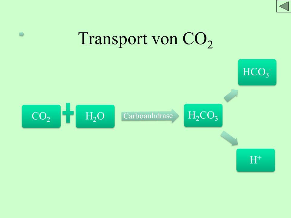 CO2H2O Carboanhdrase H2CO 3 HCO3 - H+H+ Transport von CO 2