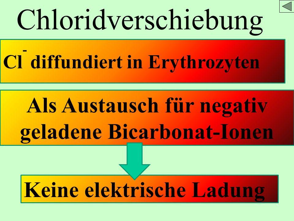 Chloridverschiebung Cl - diffundiert in Erythrozyten Als Austausch für negativ geladene Bicarbonat-Ionen Keine elektrische Ladung