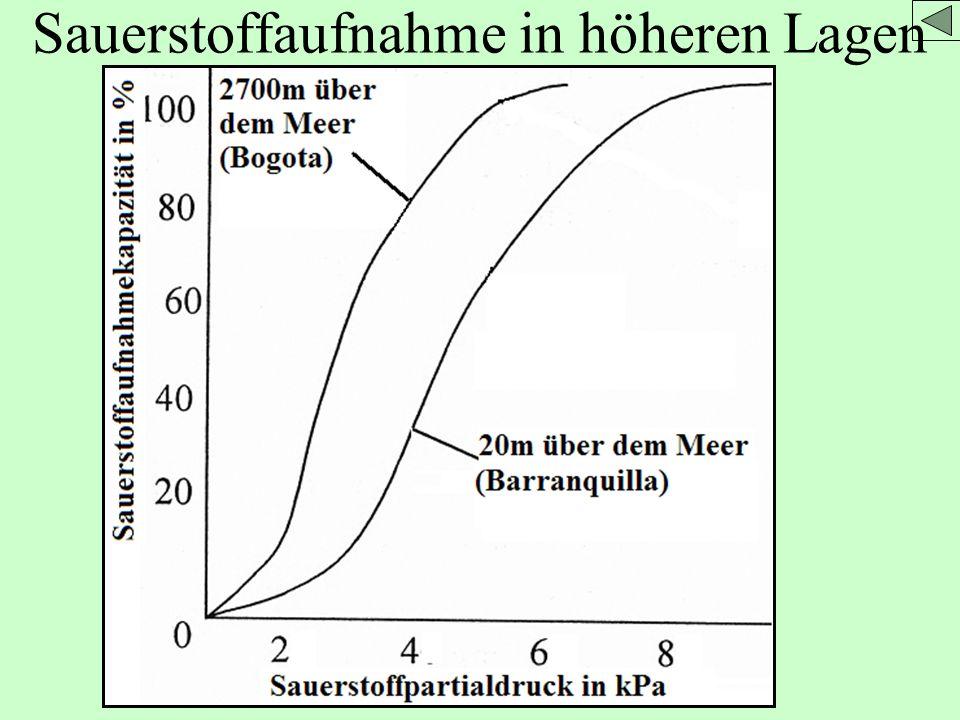 Sauerstoffaufnahme in höheren Lagen