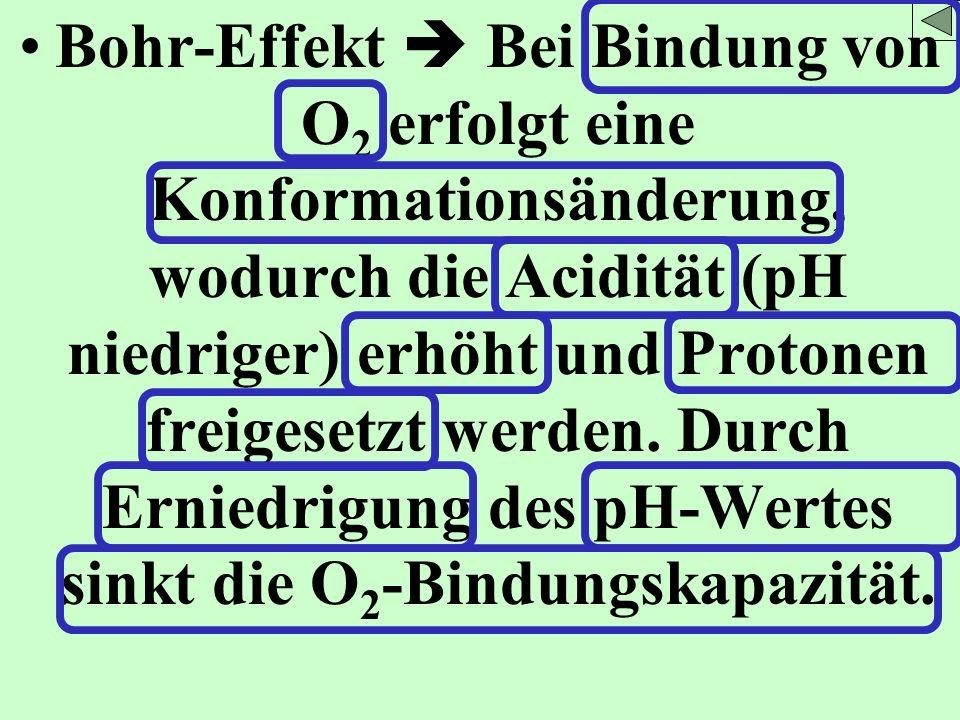 Bohr-Effekt Bei Bindung von O 2 erfolgt eine Konformationsänderung, wodurch die Acidität (pH niedriger) erhöht und Protonen freigesetzt werden. Durch