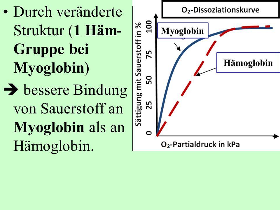 Durch veränderte Struktur (1 Häm- Gruppe bei Myoglobin) bessere Bindung von Sauerstoff an Myoglobin als an Hämoglobin. Myoglobin Hämoglobin