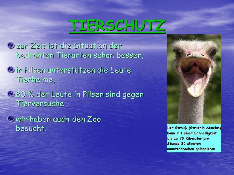 TIERSCHUTZ zur Zeit ist die Situation der bedrohten Tierarten schon besser, in Pilsen unterstützen die Leute Tierheime, 80 % der Leute in Pilsen sind gegen Tierversuche, wir haben auch den Zoo besucht.