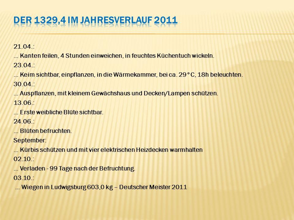 21.04.: … Kanten feilen, 4 Stunden einweichen, in feuchtes Küchentuch wickeln. 23.04.: … Keim sichtbar, einpflanzen, in die Wärmekammer, bei ca. 29°C,