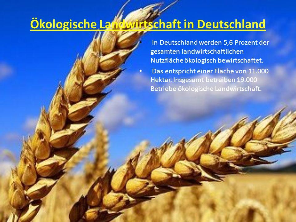 Ökologische Landwirtschaft in Deutschland In Deutschland werden 5,6 Prozent der gesamten landwirtschaftlichen Nutzfläche ökologisch bewirtschaftet. Da
