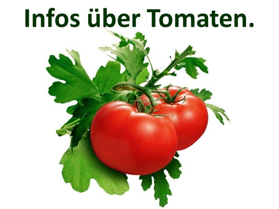 Die Tomate ist ein Nachtschat- tengewächs.
