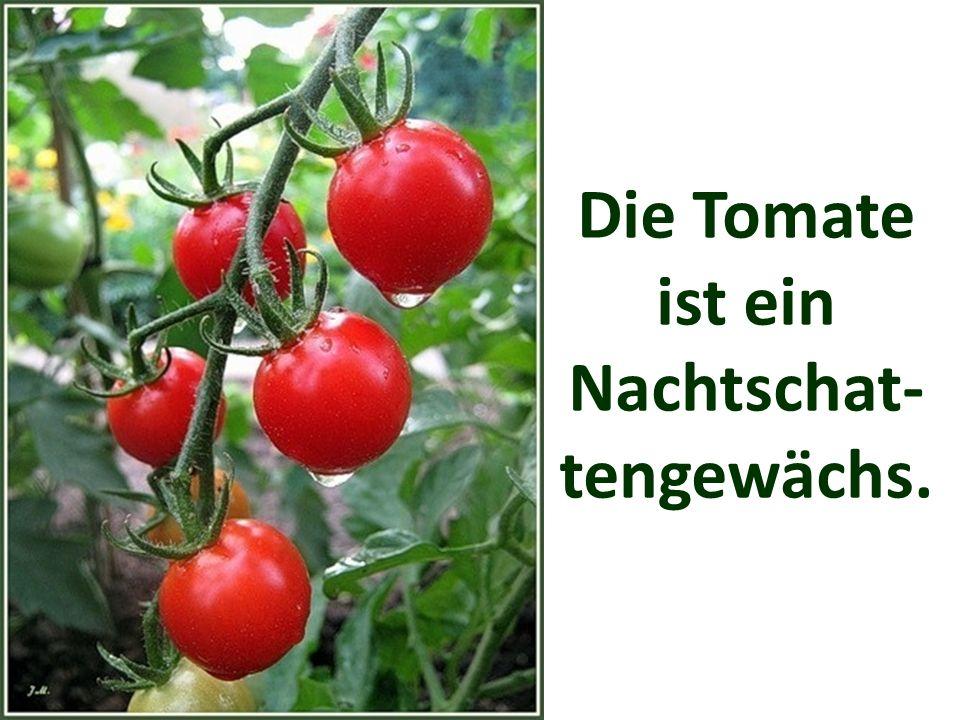 In Deutschland werden pro Person 15 kg Tomaten im Jahr verzehrt.