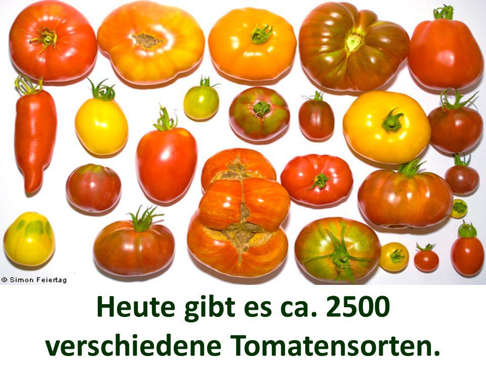 In den Monaten Juli bis Oktober gibt es frische einheimische Tomaten zu kaufen.