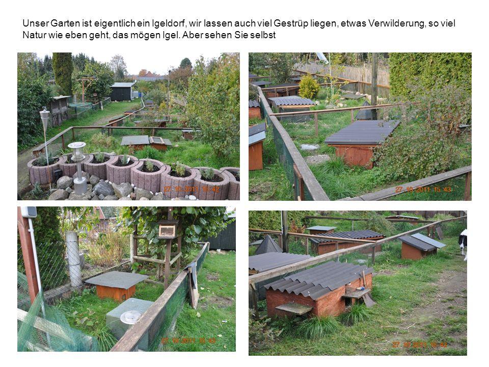 Unser Garten ist eigentlich ein Igeldorf, wir lassen auch viel Gestrüp liegen, etwas Verwilderung, so viel Natur wie eben geht, das mögen Igel. Aber s