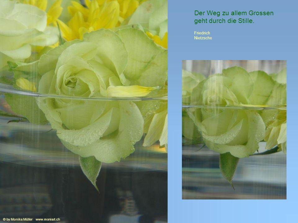 Meist belehrt erst der Verlust uns über den Wert der Dinge. Arthur Schopenhauer © by Monika Müller www.moniart.ch