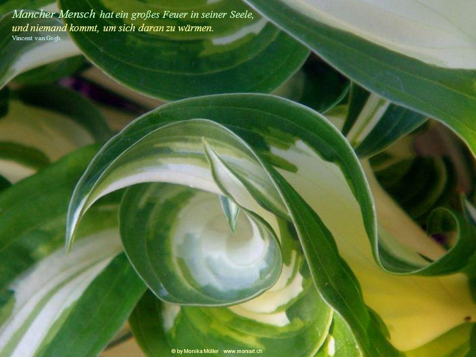 Das Suchen und der Weg sind wichtiger, als dass man wirklich etwas findet. Yehudi Menuhin © by Monika Müller www.moniart.ch