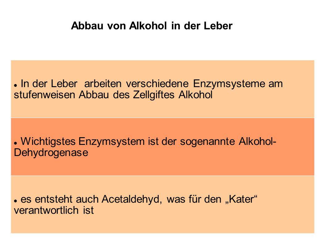 In der Leber arbeiten verschiedene Enzymsysteme am stufenweisen Abbau des Zellgiftes Alkohol Wichtigstes Enzymsystem ist der sogenannte Alkohol- Dehyd