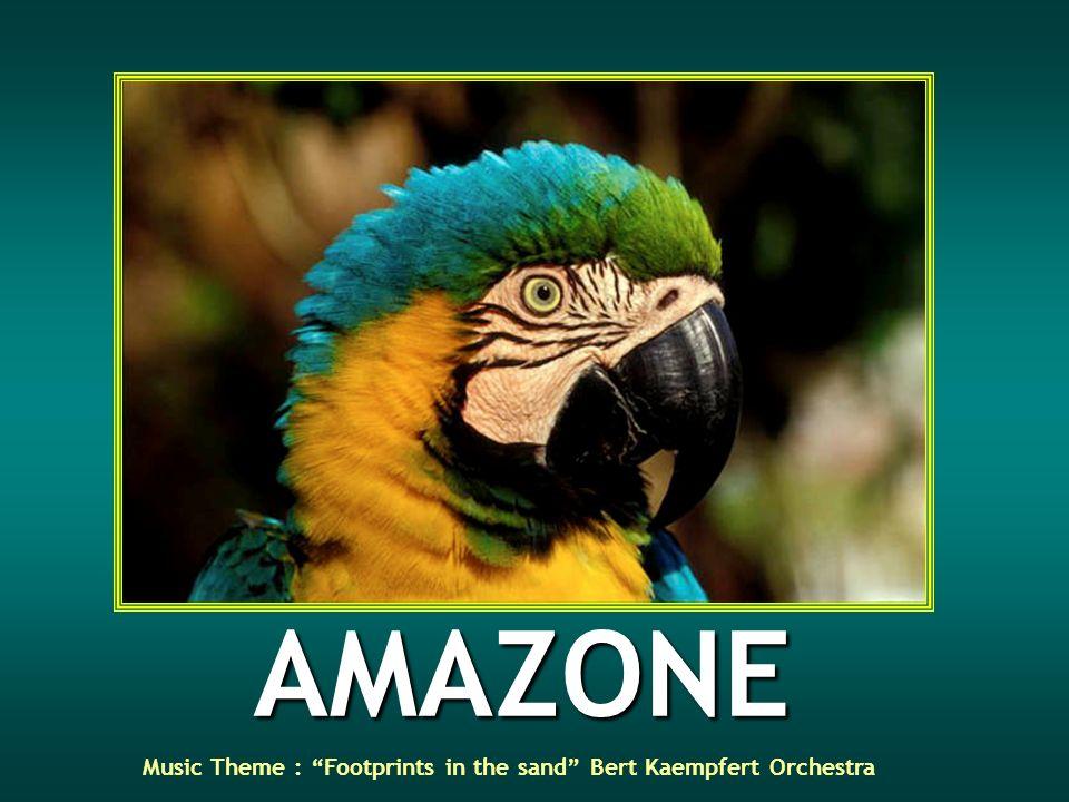 AMAZONE Music Theme : Footprints in the sand Bert Kaempfert Orchestra