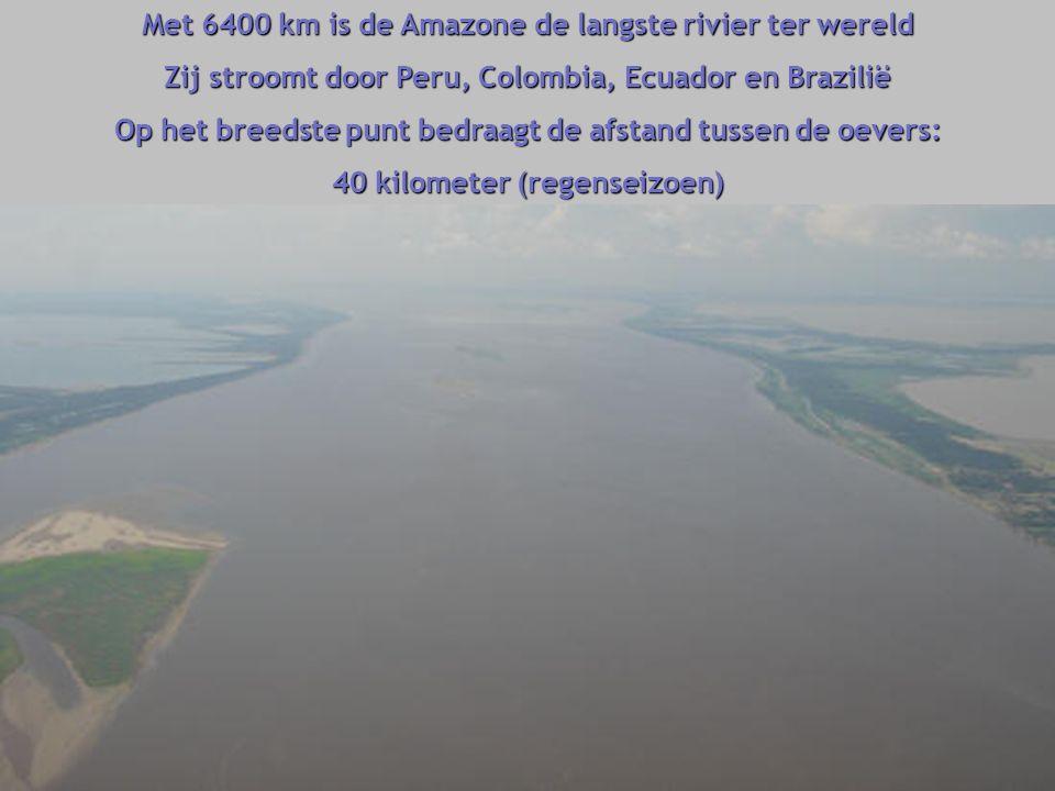 Met 6400 km is de Amazone de langste rivier ter wereld Zij stroomt door Peru, Colombia, Ecuador en Brazilië Op het breedste punt bedraagt de afstand tussen de oevers: 40 kilometer (regenseizoen)