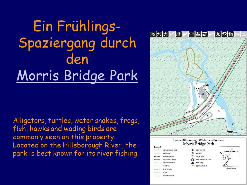 Ein Frühlings- Spaziergang durch den Morris Bridge Park Alligators, turtles, water snakes, frogs, fish, hawks and wading birds are commonly seen on this property.