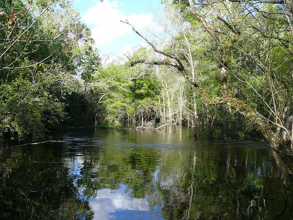 So hat sich der Fluss all die Sumpfgebiete durch die er mäandert zurückgeholt