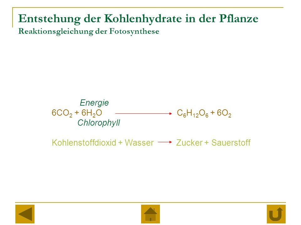 Entstehung der Kohlenhydrate in der Pflanze Reaktionsgleichung der Fotosynthese Energie 6CO 2 + 6H 2 O C 6 H 12 O 6 + 6O 2 Chlorophyll Kohlenstoffdioxid + Wasser Zucker + Sauerstoff