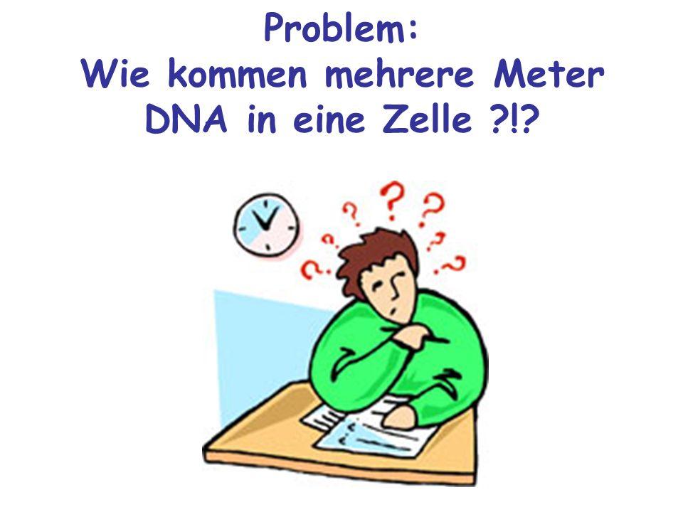 Problem: Wie kommen mehrere Meter DNA in eine Zelle ?!?